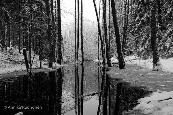 Bleak Creek II