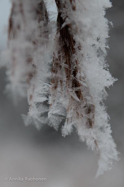 Winter Night's Dream
