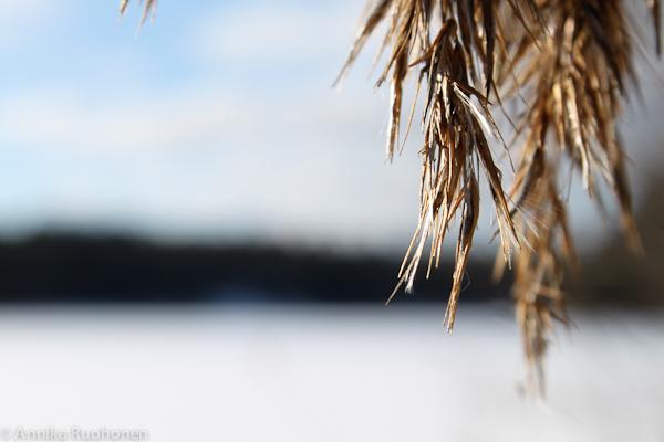 Last Days of Winter