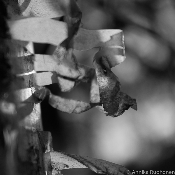 Gleam of Light III