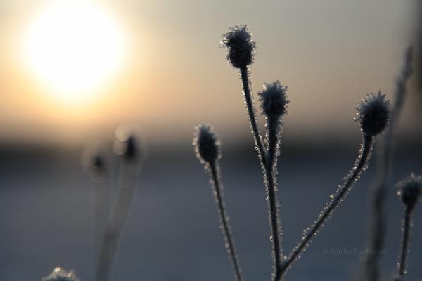 Arctic Sun II