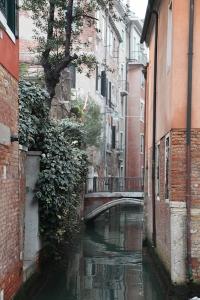 4. Missing Venice